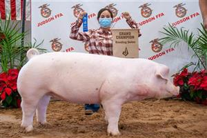 Swine Grand Breeding